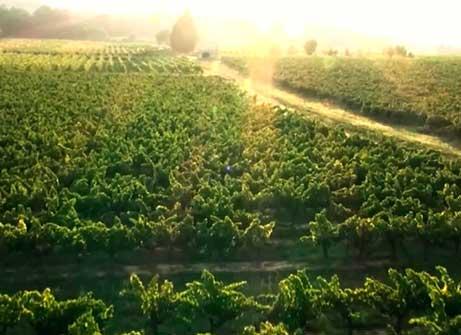 Clube do Vinho Vinícola 4